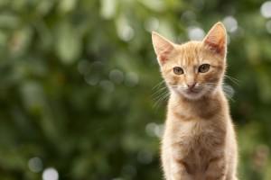 cat-972655_1920